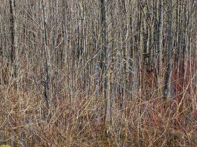 Edward Burtynsky, 'Natural Order #19, Grey County, Ontario, Canada, Spring', 2020