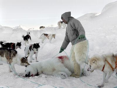 Henrik Saxgren, 'Markus with Polar Bear and Dogs', 2016