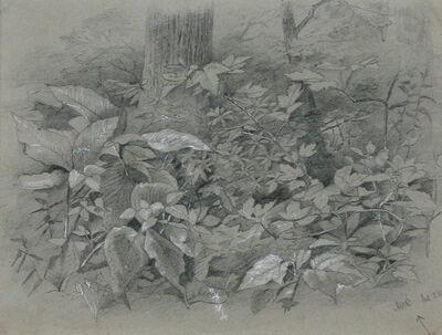 Anna Richards Brewster, 'Plant Study'