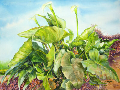 Emilio Torrez, 'Wild Calla Lilies', 2017