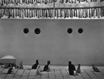 Pentti Sammallahti, 'Iceland (Cats Looking Up at Hanging Fish)', 1980