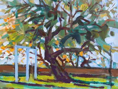 Robert Sweeney, 'Olive Tree, October', 2018