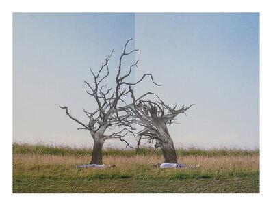 Eduardo Mattos e Fernanda Figueiredo, 'duas árvores mortas', 2013
