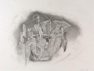 Eric Green, 'Plant', 1993