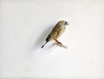 Claire Kerr, 'Bird', 2017