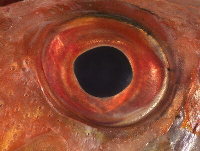 Bruna Esposito, 'Eye (Scorpio)', 2016