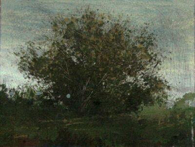 Peter Hoffer, 'Tanglewood'
