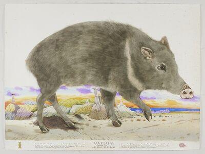 Scott Kelley (b. 1963), 'Javelina - The Skunk Pig', 2021
