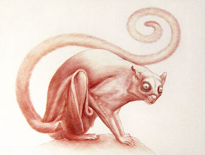 Jean Pierre Arboleda, 'Red Squirrel Study', 2019