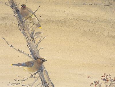 Thomas Quinn, 'Cedar Waxwings and Madrone Berries', 2011