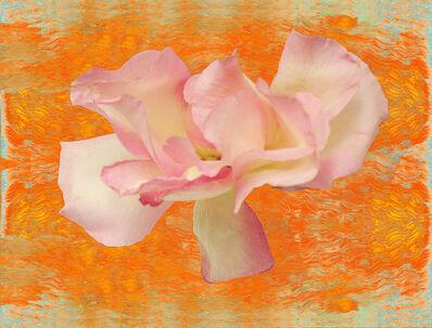 Ann Pachner, 'Blossom/Fire', 2016