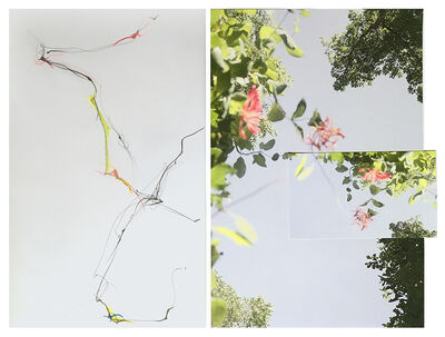 Sandi Haber Fifield, 'Untitled (LF16#144)', 2016