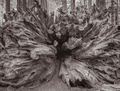 Lee Backer, 'Fallen Redwood, Humboldt, California'