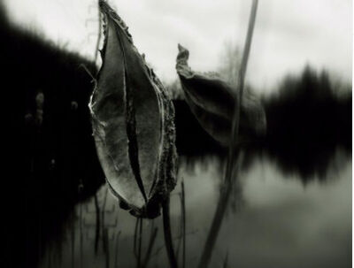 Tim White, 'untitled', 2021