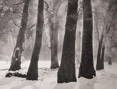 John Sexton, 'Black Oaks, Morning Mist, Yosemite Valley, CA', 1984