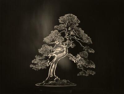 Yamamoto Masao, 'Bonsai #4000', 2018