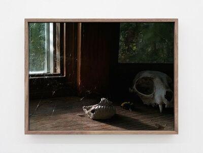 Michel Auder, 'Dead Bee', 2012