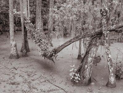 Lee Backer, 'Audubon Swamp, Charleston, South Carolina'