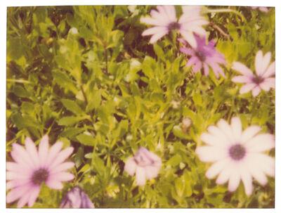 Stefanie Schneider, 'Artificial Flowers', ca. 1999