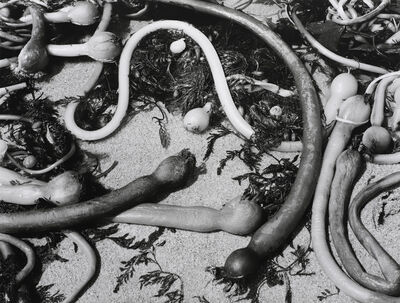 Brett Weston, 'Kelp, 1954', 1954
