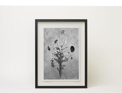 Jonty Sale, 'Herbaria 1', 2015