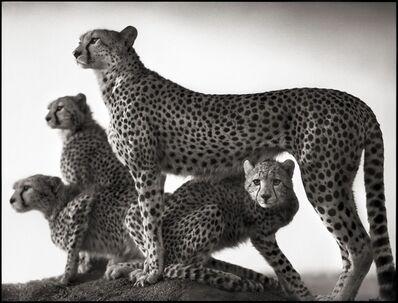 Nick Brandt, 'Cheetah & Cubs, Maasai Mara 2003'