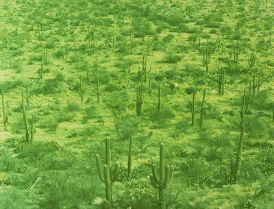 David Benjamin Sherry, 'Saguaro Field, Tucson, Arizona', 2013