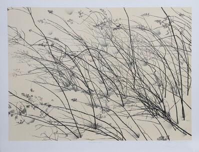 Jon D'Orazio, 'Windswept', 1980