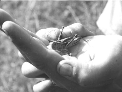 Robert Manson, 'Travaux des champs et animaux de la ferme', c. 1950