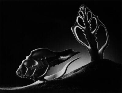 Ruth Bernhard, 'Cross-section', 1973