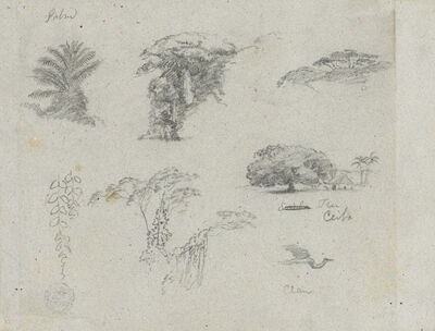 Frederic Edwin Church, 'Sketches from South America.  Botanical sketches.   Flying crane.', 1853