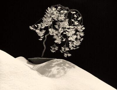 Yamamoto Masao, 'Bonsai #4028', 2019