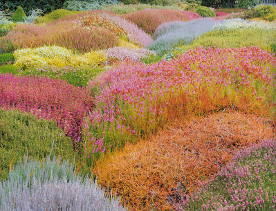 Christopher Burkett, 'Summer Heather Garden, California', 1998