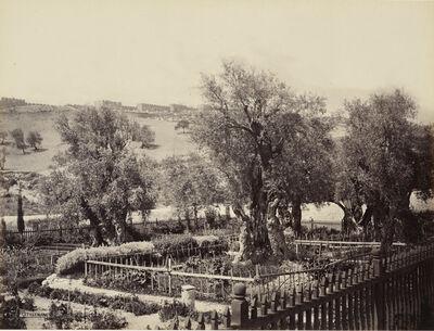Francis Bedford, 'The Garden of Gethsemane [Jerusalem]', 2 April 1862