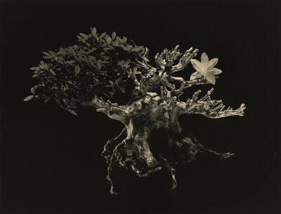 Yamamoto Masao, ''4034' from 'Bonsai – Microcosms Macrocosms'', 2019