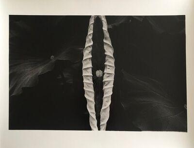 Issei Suda, 'Shadow', 2013