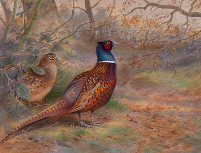 David Kristupas, 'Pheasants Beneath the Oak Trees', Active Contemporary