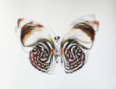 Stefania Ricci, 'Butterfly 060', 2019