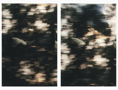 Sam Shmith, 'Untitled (figure, glass, landscape / consecutive)', 2019