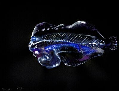 Alexis Rockman, 'Untitled (Flounder)', 2013