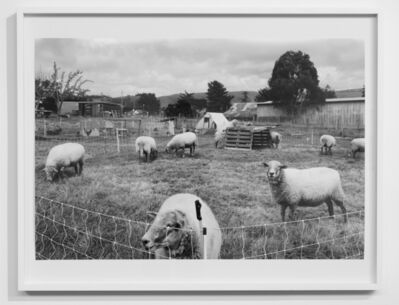 Alice Shaw, 'Sheep/3:303:38-2:27:44pm', 2017-2018