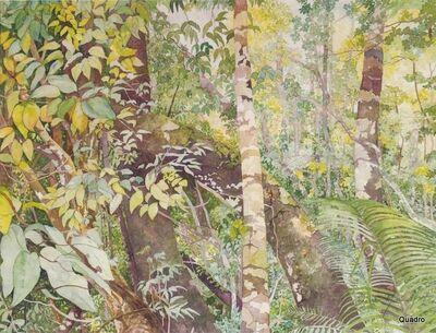 Dircea Mountfort, 'Amazonas - Floresta Adentro'