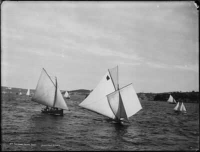 Henry King, 'Centennial Regatta, Sydney Harbour', 1888