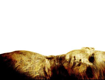 Drew Tal, 'Field of Sorrow'