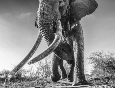 David Yarrow, 'Lugard', ca. 2017