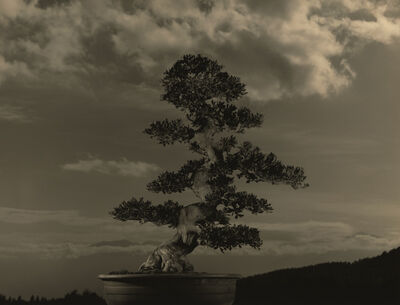 Yamamoto Masao, ''4040' from 'Bonsai – Microcosms Macrocosms'', 2019
