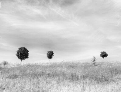 Betsy Weis, 'Trees in the Distance', 2016
