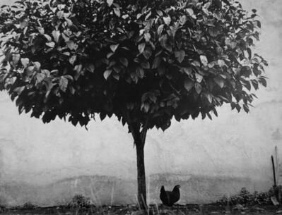 Edouard Boubat, 'L'arbre et la Poule, Pau, France', 1950