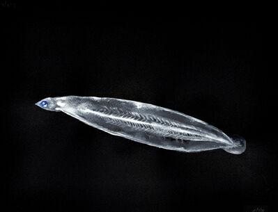 Alexis Rockman, 'Untitled (Eel Larva)', 2013