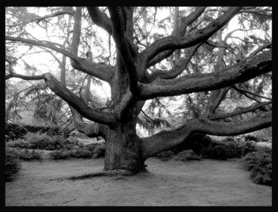 Penelope Stewart, 'Luci's Tree', 2014